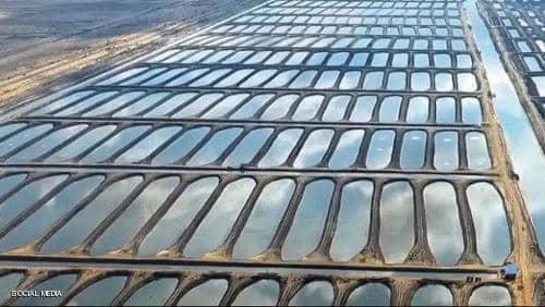 """الرئيس المصري يفتتح """"الفيروز"""" أكبر مزرعة سمكية في الشرق الأوسط"""